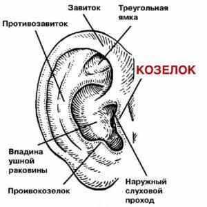 Сломанные уши - как это выглядит и что с этим делать