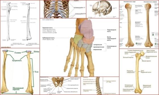 Фиброзная дисплазия костей - что это такое, симптомы и лечение