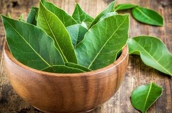 Лечение лавровым листом остеохондроза - лучшие рецепты