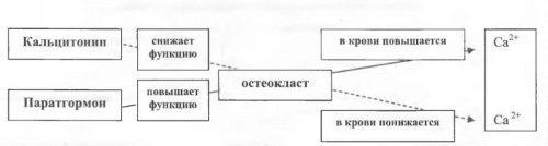 ВЕПРЕНА - инструкция по применению, цена, отзывы и аналоги