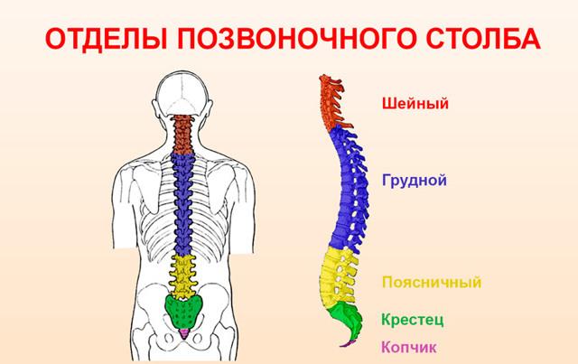 Тахикардия при остеохондрозе шейного отдела позвоночника