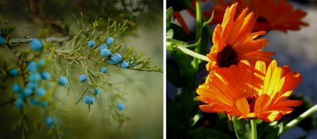 Травы при артрите - лучшие рецепты для лечения