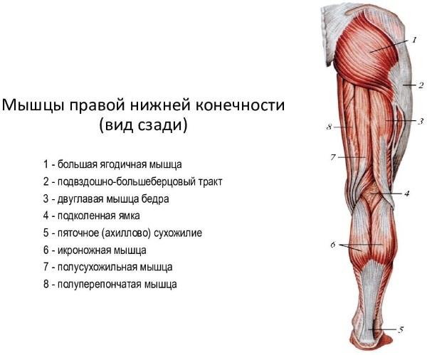 Боль под коленом сзади - причины, диагностика и чем лечить