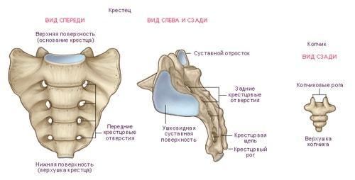 Остеохондроз копчика - симптомы и методы лечения