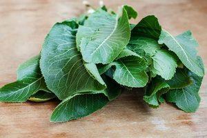 Листья хрена при остеохондрозе - как лечить, рецепты
