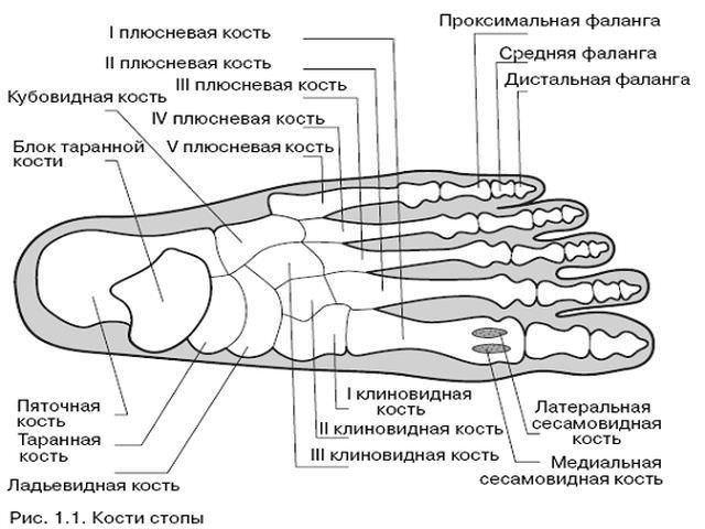 Перелом мизинца на ноге - что делать и как быстро вылечить?