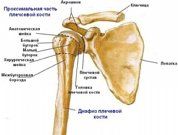 Как разработать руку после перелома плечевой кости в домашних условиях