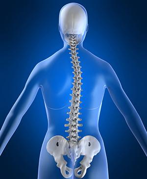 Сколиоз грудного отдела позвоночника - симптомы и лечение