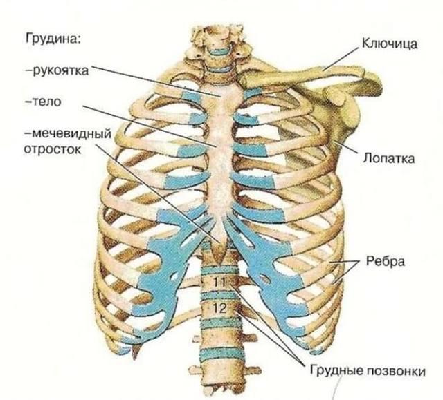 Перелом грудины - симптомы, признаки и лечение