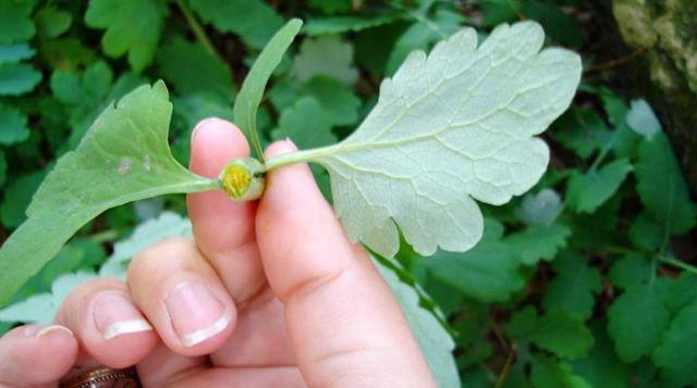 Травы для суставов и хрящей - лечение народной медициной